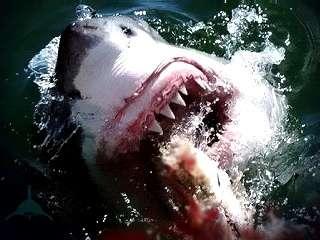 игра белой акулы