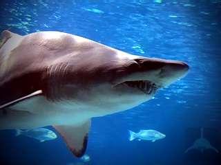 скачать песчаные акулы торрент - фото 2